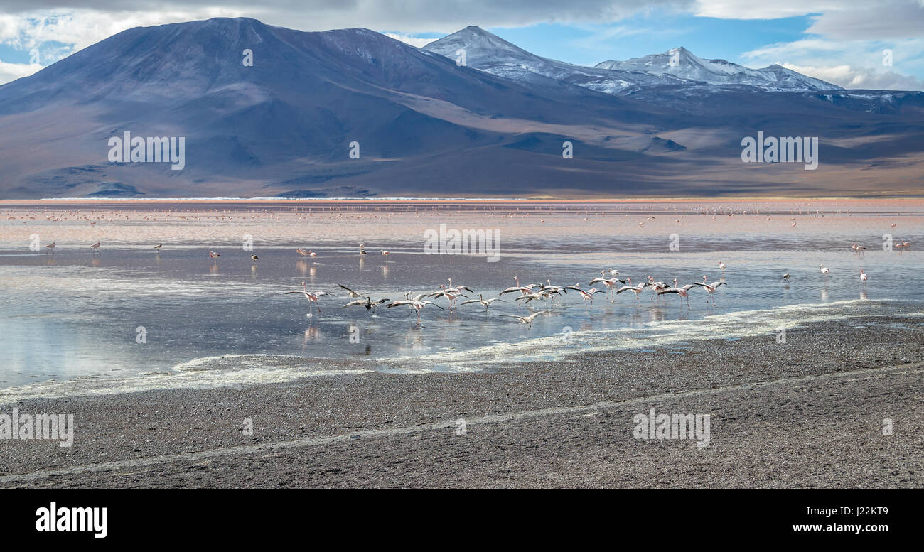 Laguna Colorada (Red Lagoon) in Bolivean altiplano - Potosi Department, Bolivia - Stock Image
