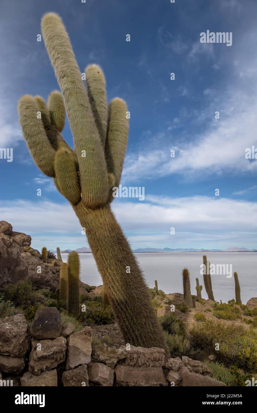 Incahuasi Cactus Island in Salar de Uyuni salt flat - Potosi Department, Bolivia - Stock Image