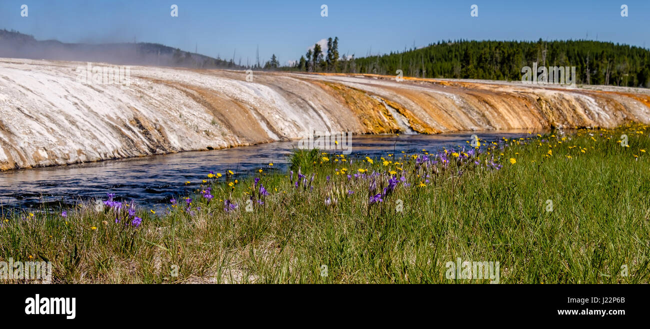 Gentians and Wildflowers, Black Sand Basin, Yellowstone National Park, Wyoming, United States - Stock Image