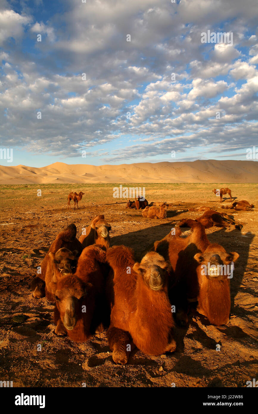 Light and shade on sand dunes in Gobi Desert Khongoryn Els Gurvan Saikhan National Park Mongolia - Stock Image