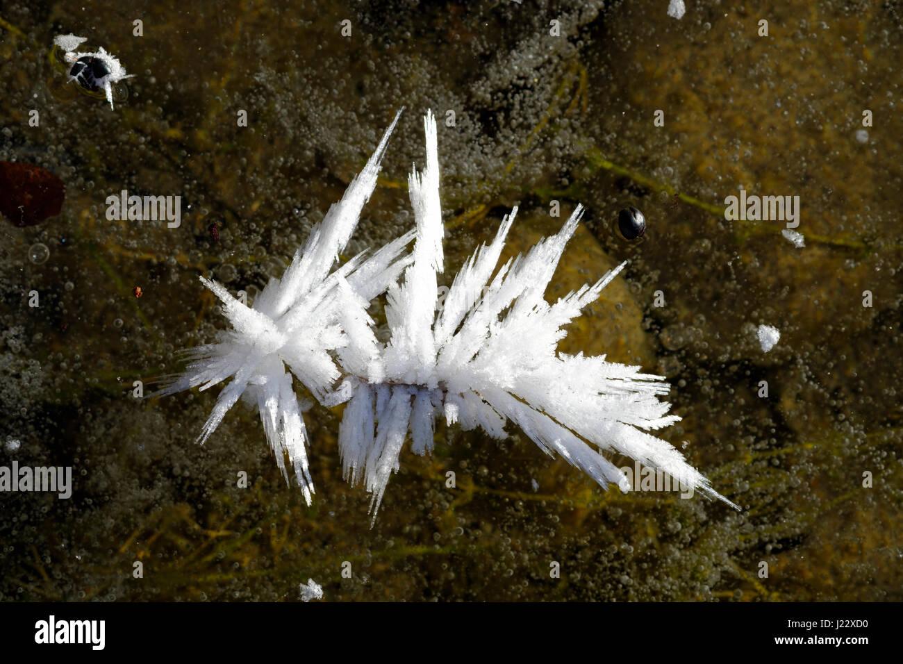 Eiskristalle auf  Eisfläche, Naturschutzgebiet Isarauen, Bayern Deutschland - Stock Image