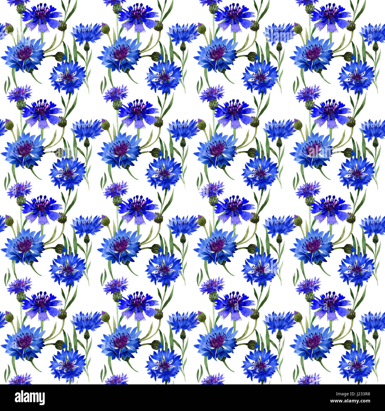 Wildflower carnation flower pattern in a watercolor style isolated. Full name of the plant: blue carnation field. - Stock Image