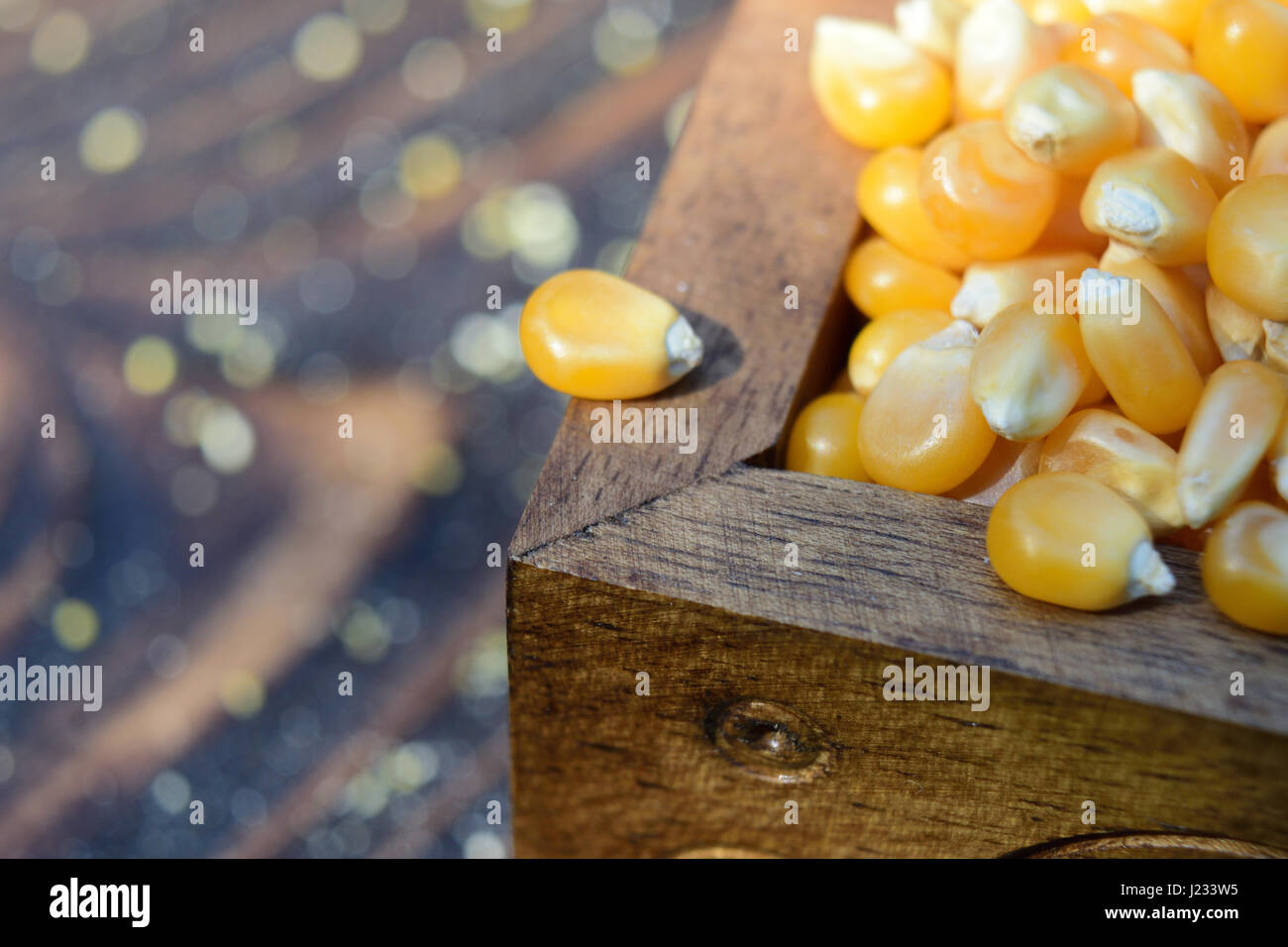 A corn bean on the edge of a wooden chest full of corn beans. Natural light, wooden table. - Stock Image