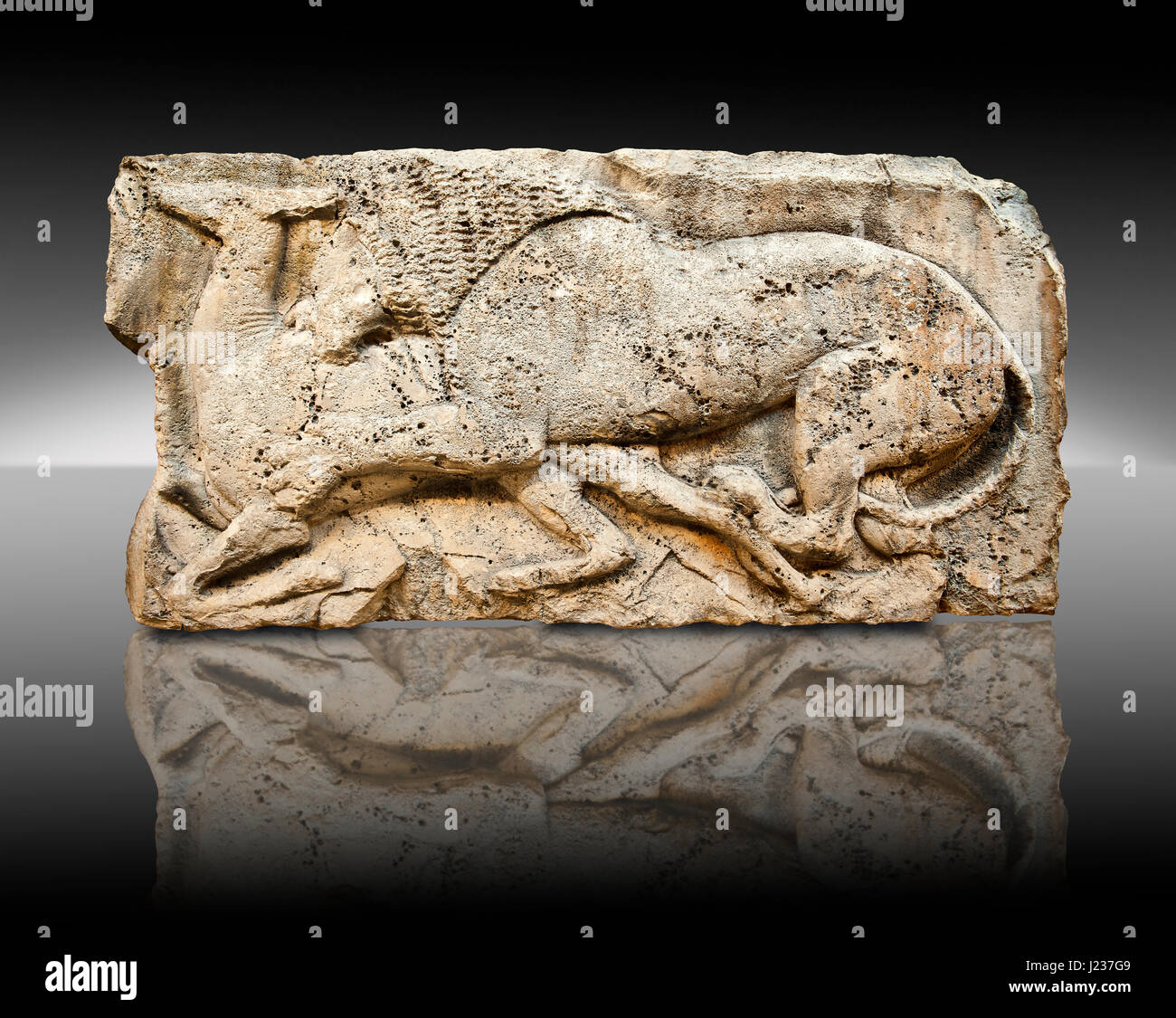 Lion killing deer  from the 'Satyr Hunting Wils Animals, freezes, 460 B.C.  From Xanthos, UNESCO World Heritage - Stock Image