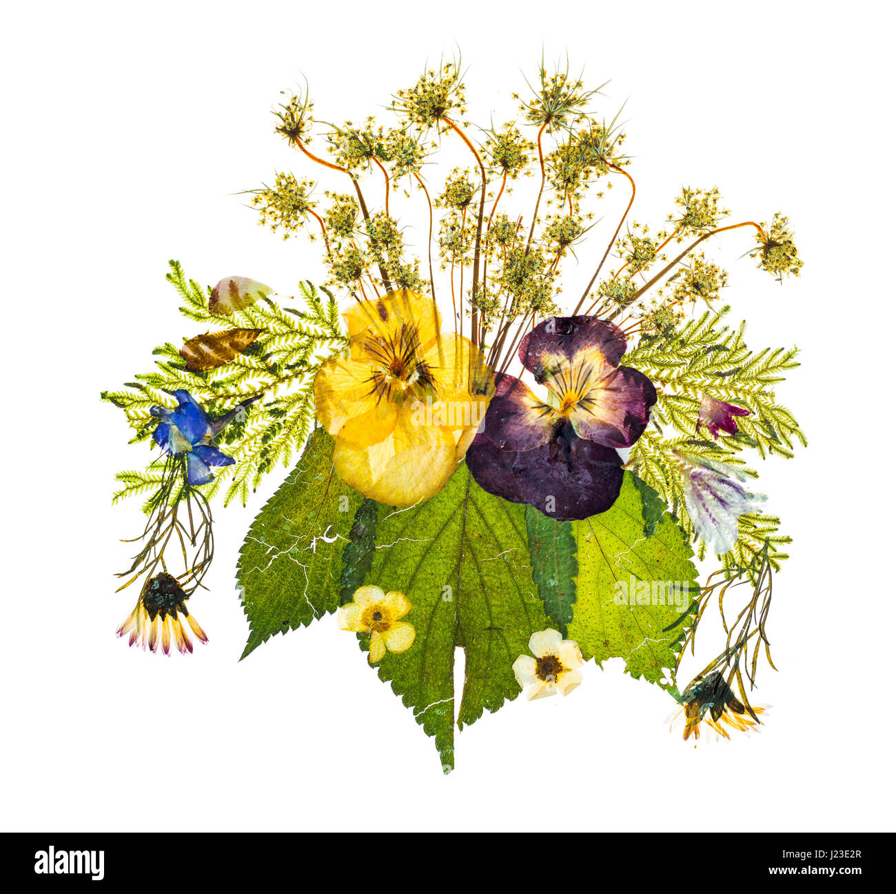Beautiful pressed dried flowers arrangement on white background - Stock Image