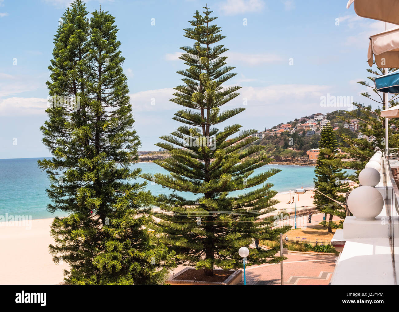 Coniferous trees in front of the Coogee Pavilion in Sydney, New South Wales, Australia - Stock Image