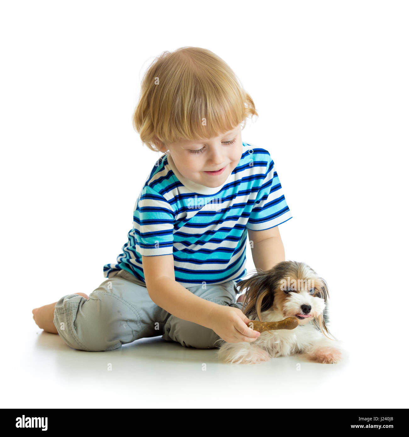 Child feeds dog puppy isolated on white background - Stock Image