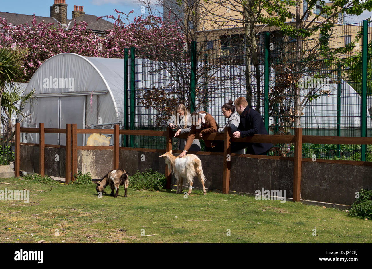 Families visiting the Spitalfields City Farm in east London,England,UK - Stock Image