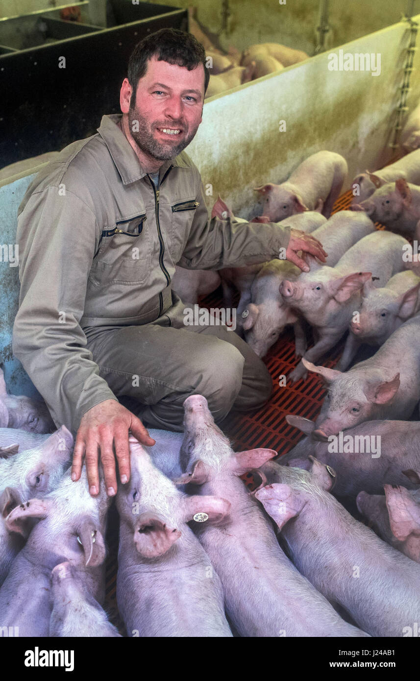 Farmer Stefan Wille with pigs on his farm in Liessow, Germany, 21 April 2017. Farmers in the state of Mecklenburg - Stock Image