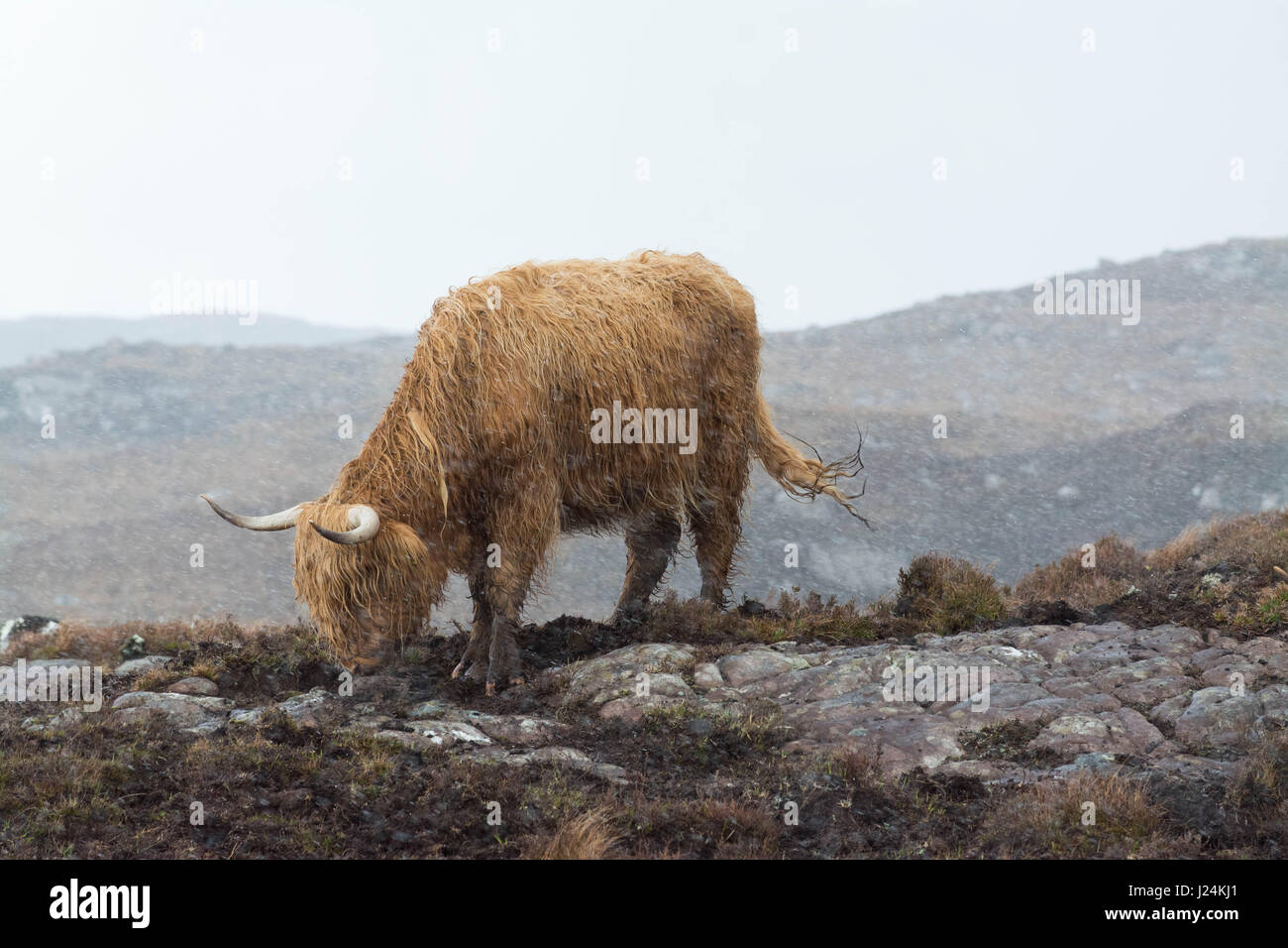 Torridon, Scottish Highlands. 25th Apr, 2017. UK weather - hail and biting winds in Torridon in the Scottish Highlands - Stock Image