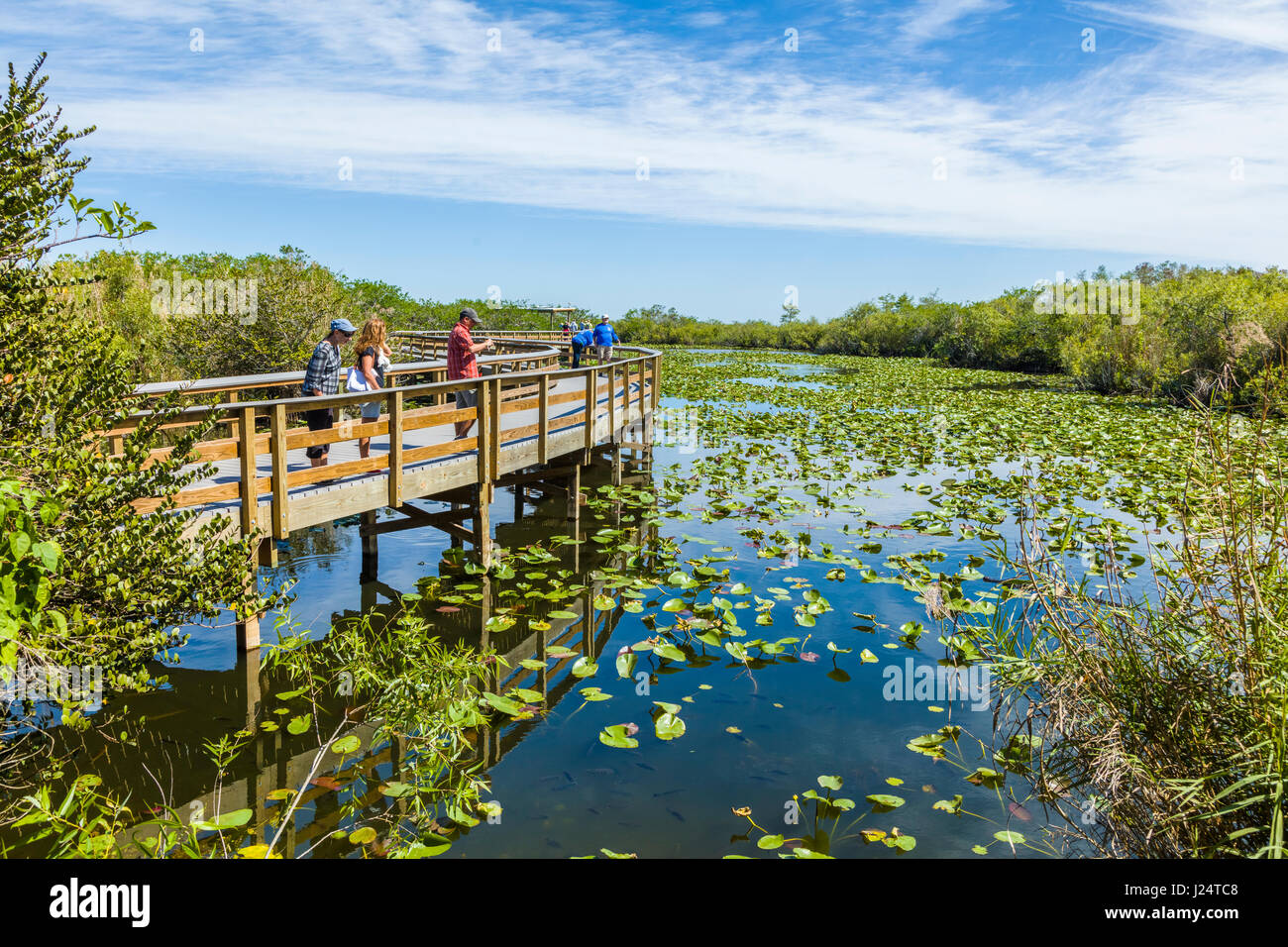 The popular Anhinga Trail at the Royal Palms Visitor Center though sawgrass marsh in the Everglades National Park - Stock Image