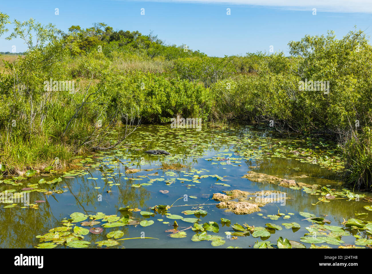 Sawgrass marsh along the popular Anhinga Trail at the Royal Palms Visitor Center in the Everglades National Park - Stock Image
