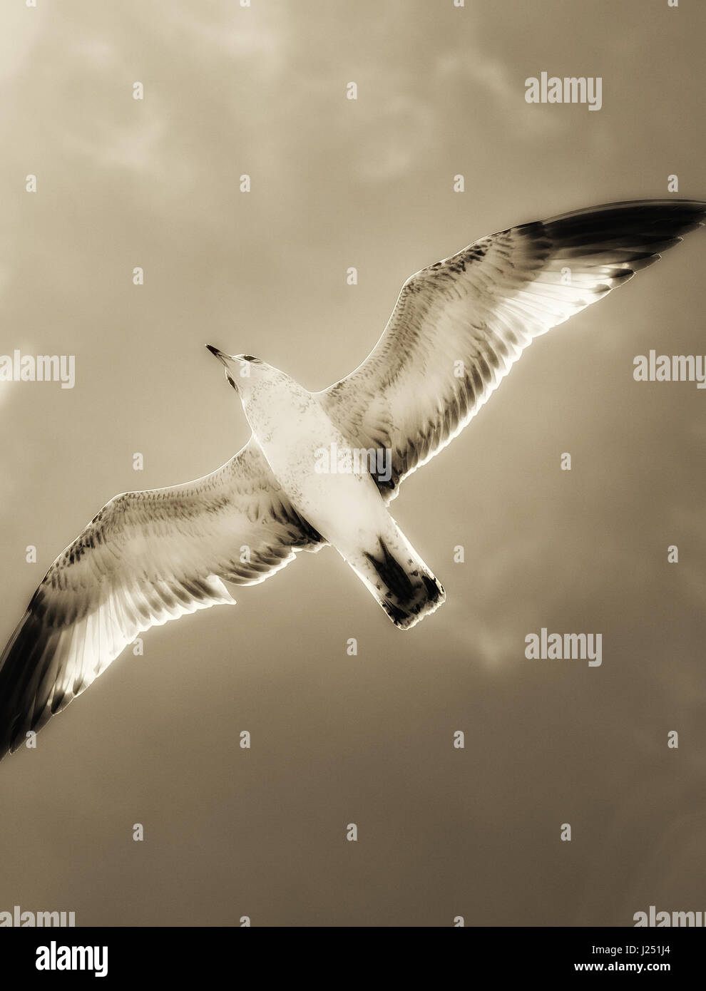 Bird flying free over the beach Stock Photo