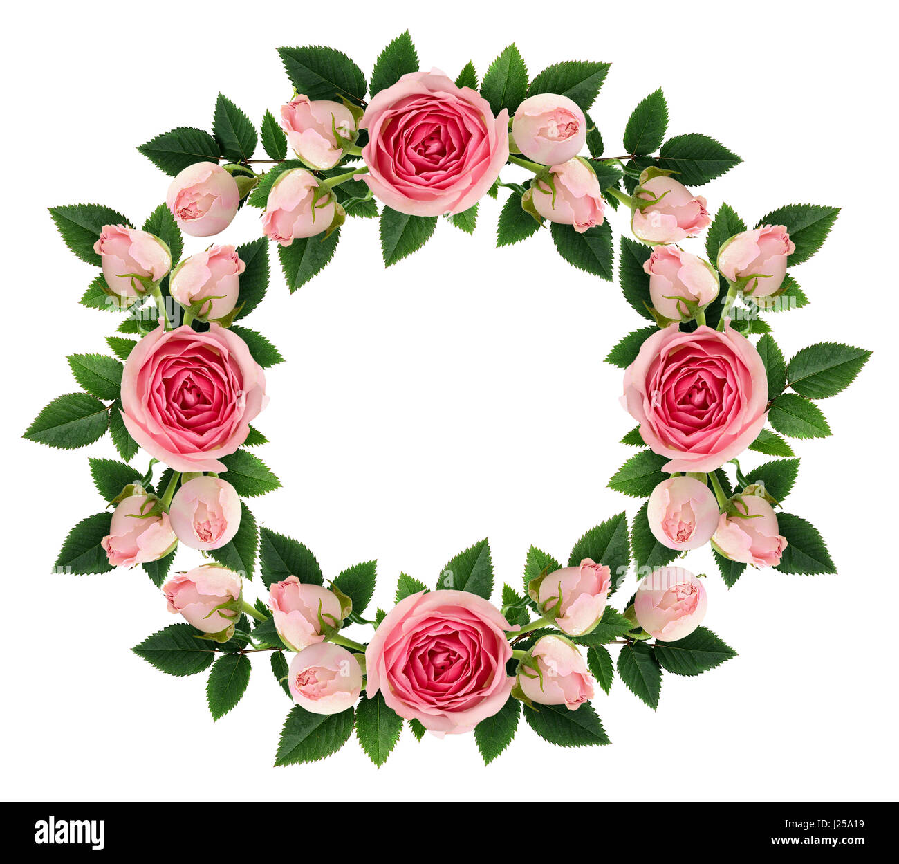 Pink Rose Flowers And Buds Round Frame Isolated On White Flat Lay