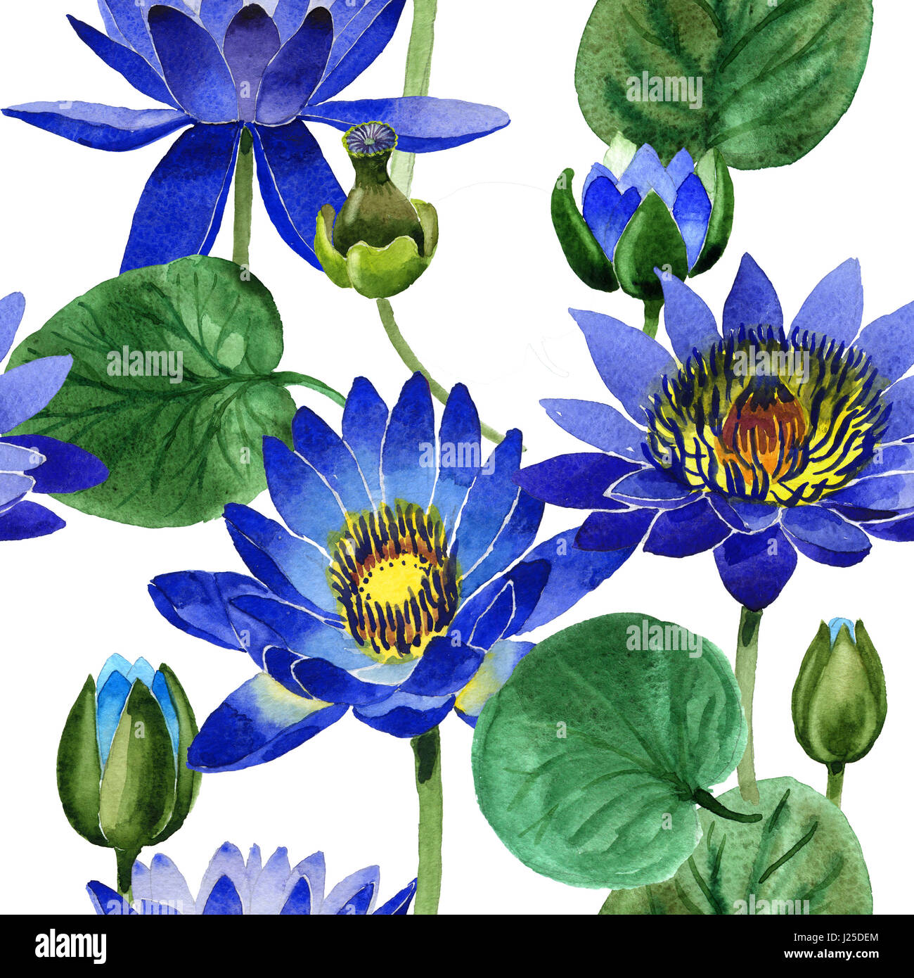 Lotus flower wallpaper stock photos lotus flower wallpaper stock wildflower blue lotus flower pattern in a watercolor style isolated full name of the plant izmirmasajfo