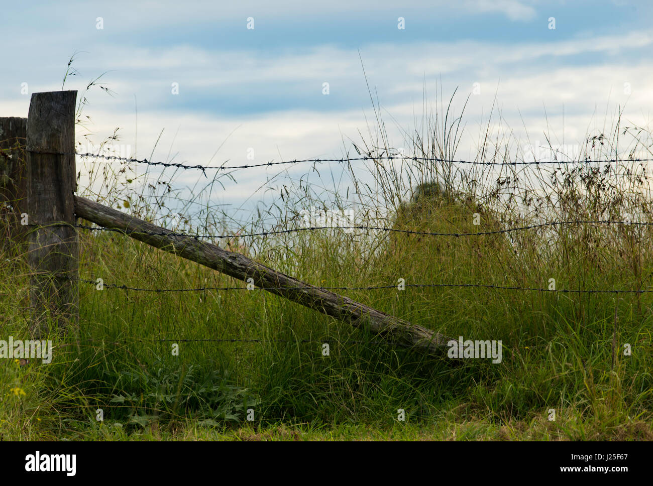 Old and rusting barbed wire fencing with eucalyptus (gum tree) hardwood fence posts on a farm property in New South - Stock Image