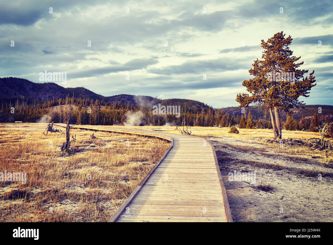 Vintage toned wooden path in Yellowstone National Park, Wyoming, USA. - Stock Image