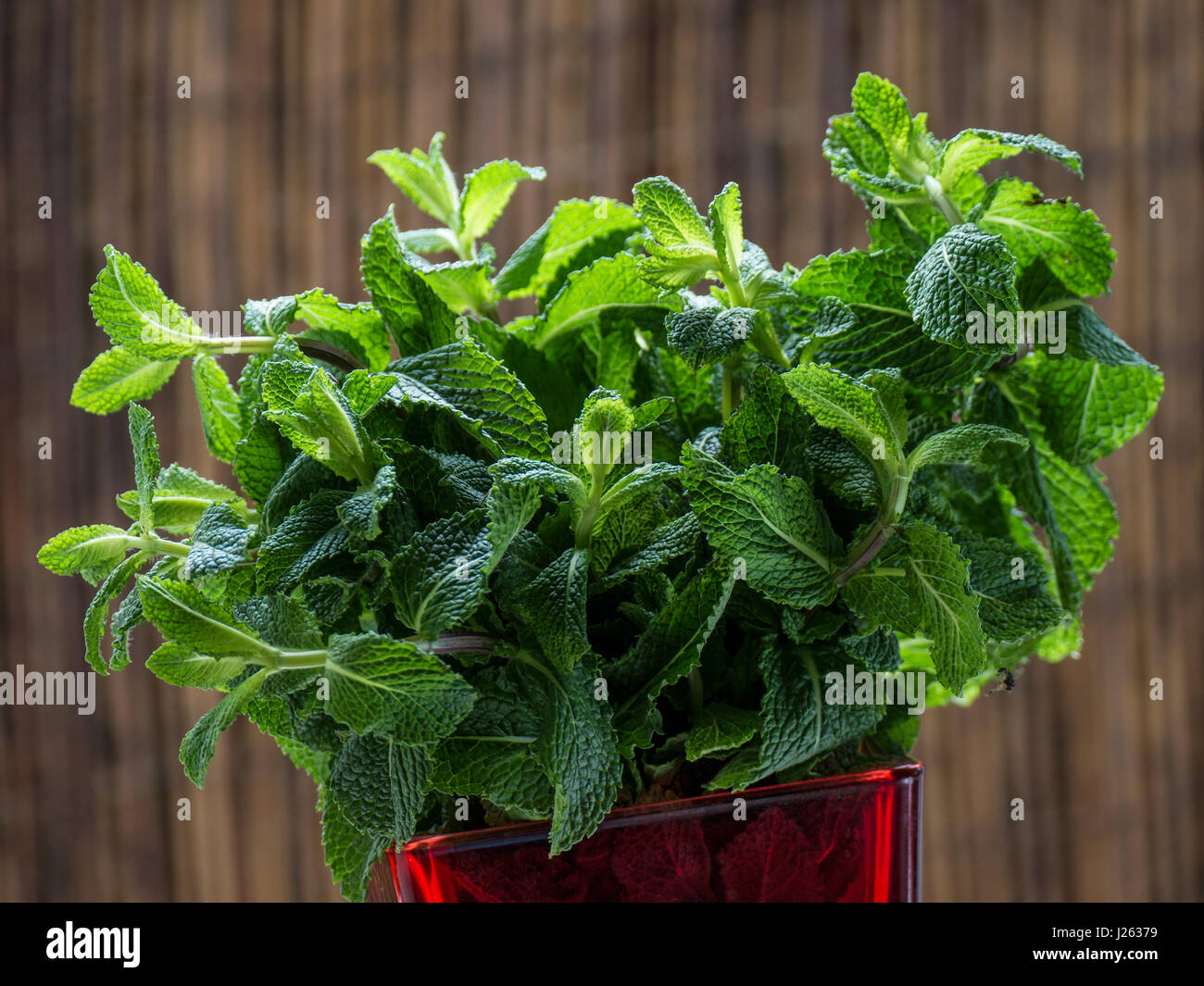 Fresh fulsome sprig of aromatic fresh mint leaves near open kitchen window - Stock Image