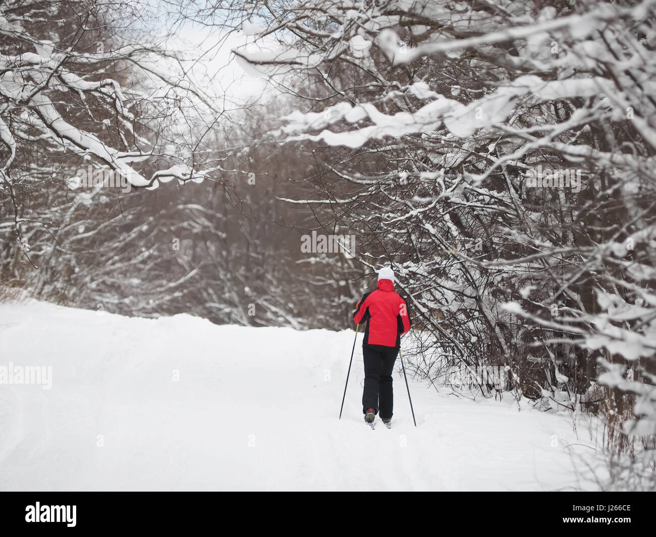 Skier in the forest - Stock Image