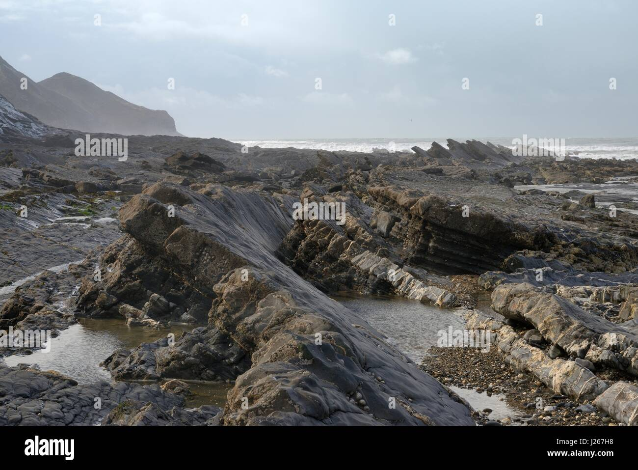 Fractured, twisted layers of mudstone and black shale exposed at low tide, Crackington Haven, Cornwall, UK, March. - Stock Image