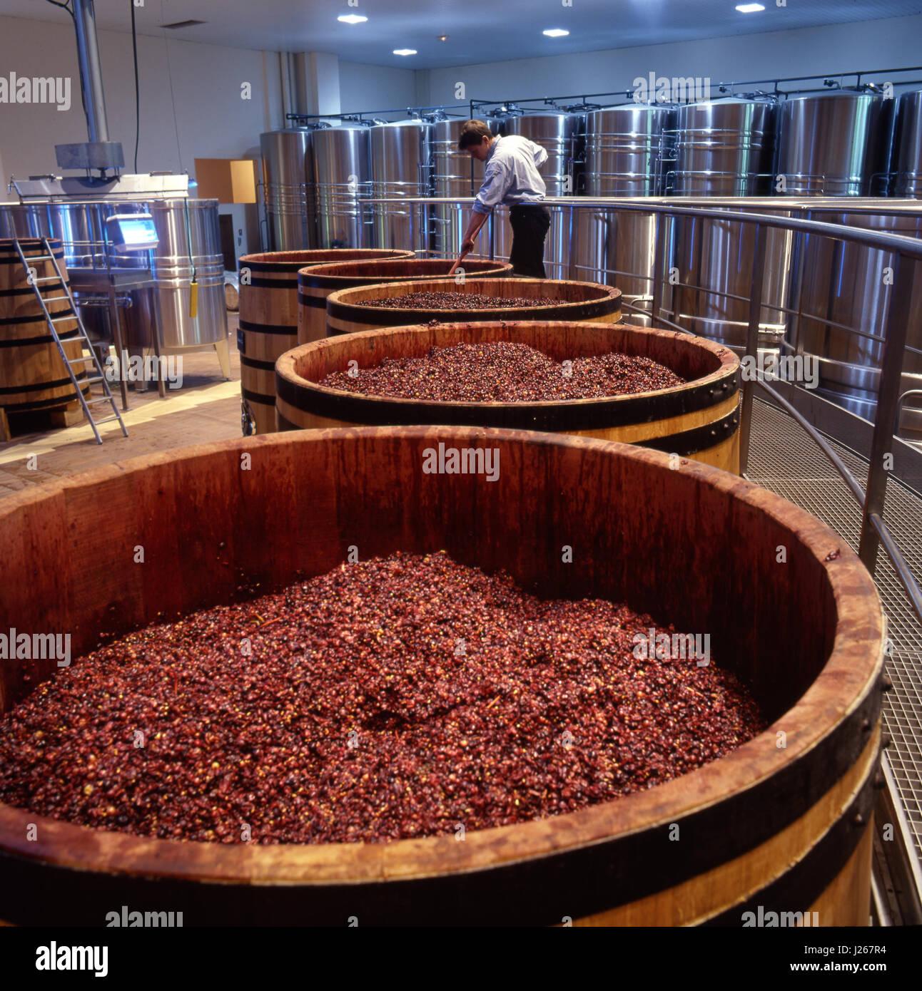 Pigeage, breaking the skin crust of Pinot Noir grapes fermenting in oak barrels in La Sablière winery of Louis - Stock Image
