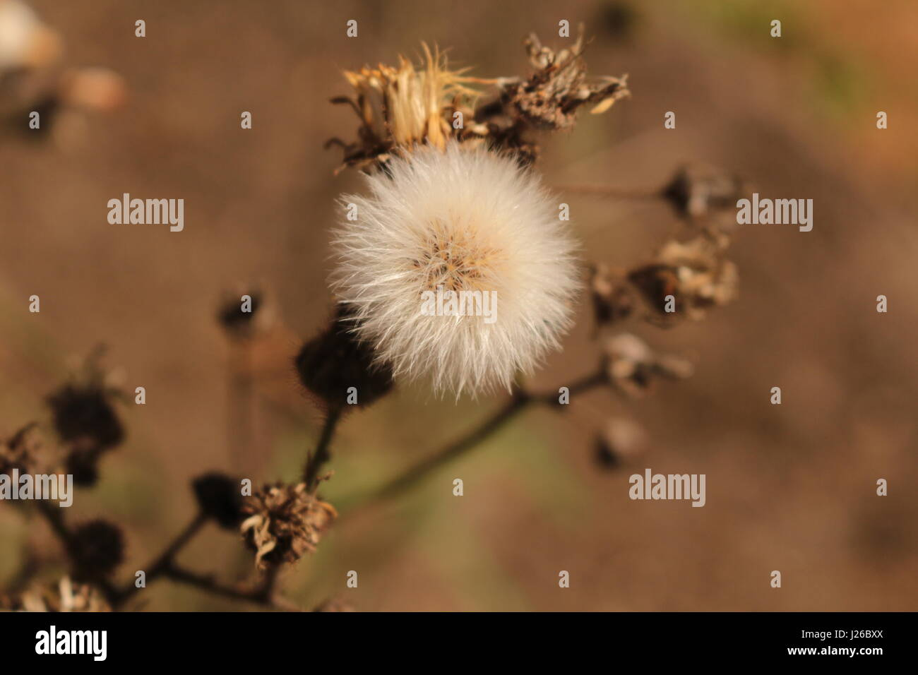 Good Morning Nature Hd Wallpaper Stock Photos Good Morning Nature