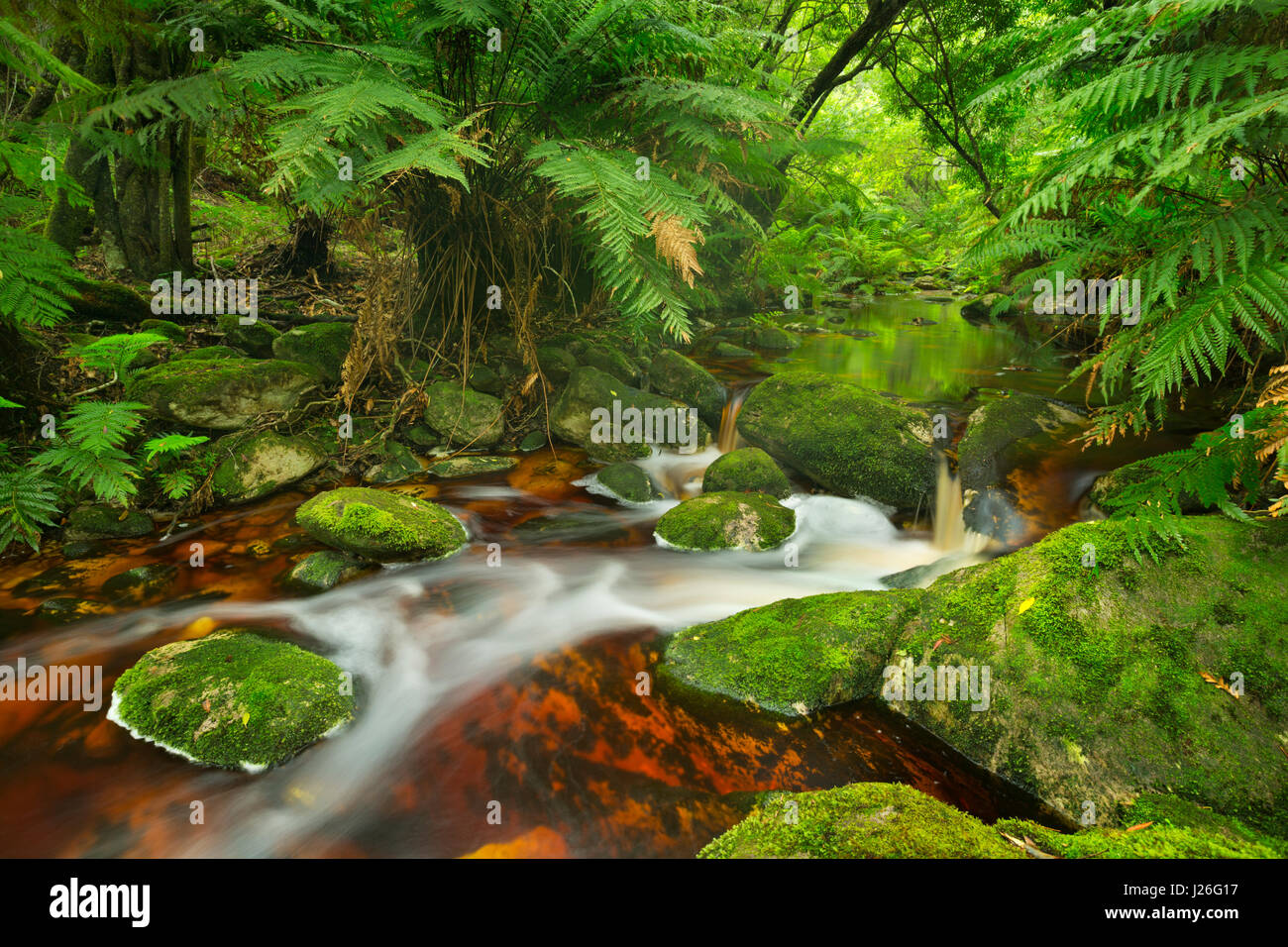 Red river through lush temperate rainforest in the Garden Route National Park in South Africa. - Stock Image