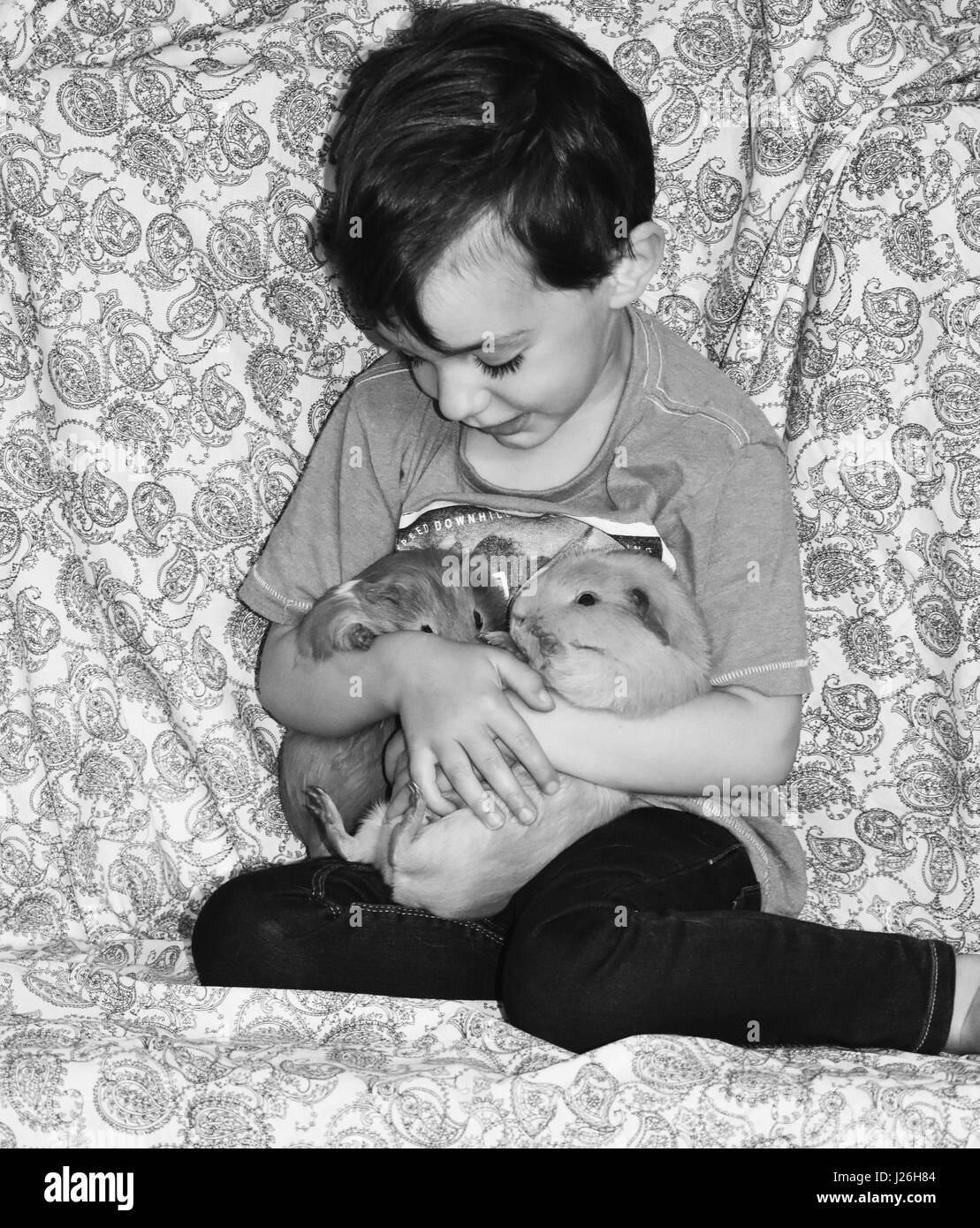 Guinea pigs with a little boy holding them on a paisley blue background - Stock Image