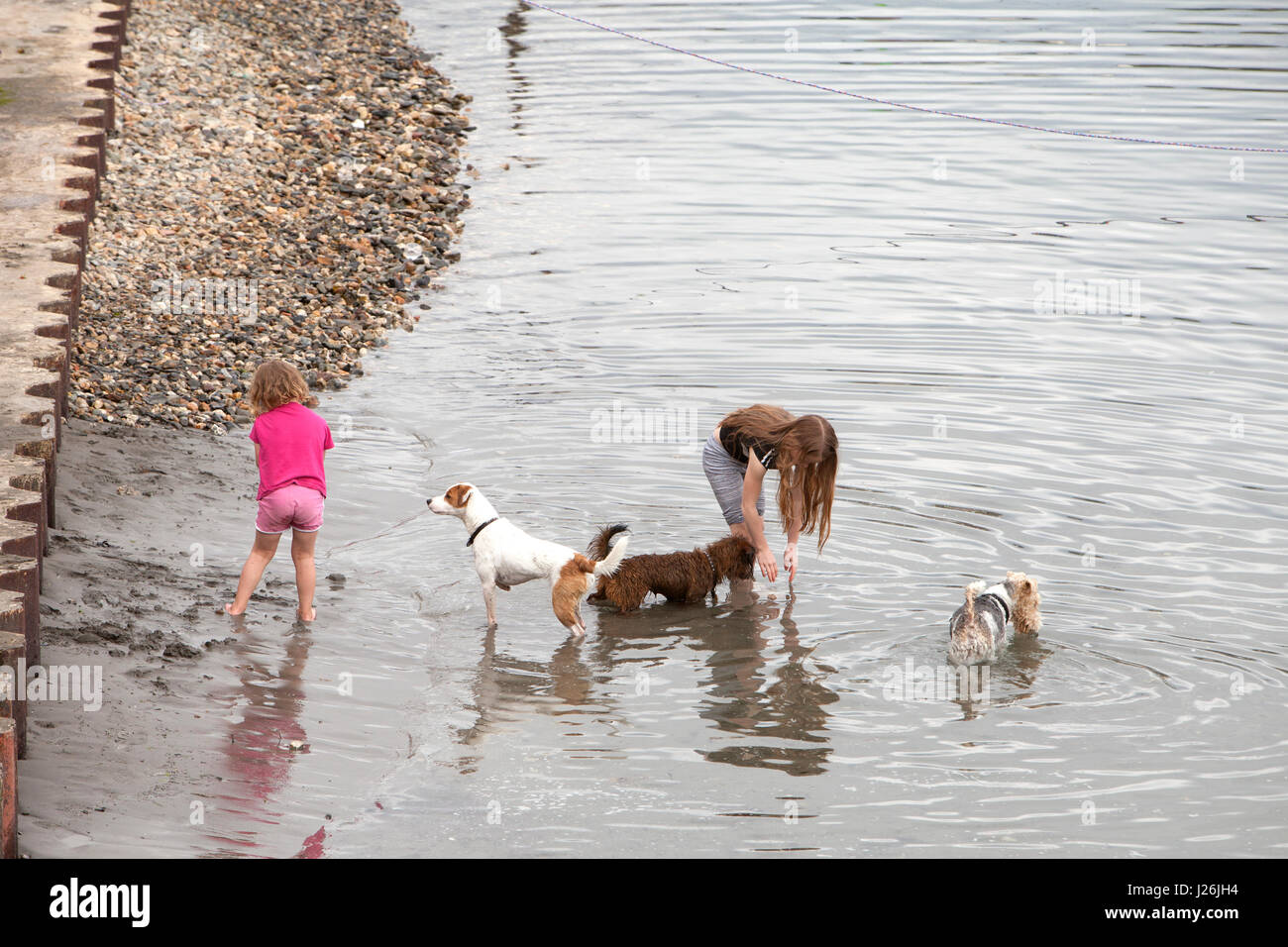 Two young girls play with three small dogs at the edge of the water in Porthleven Harbour, Cornwall. - Stock Image