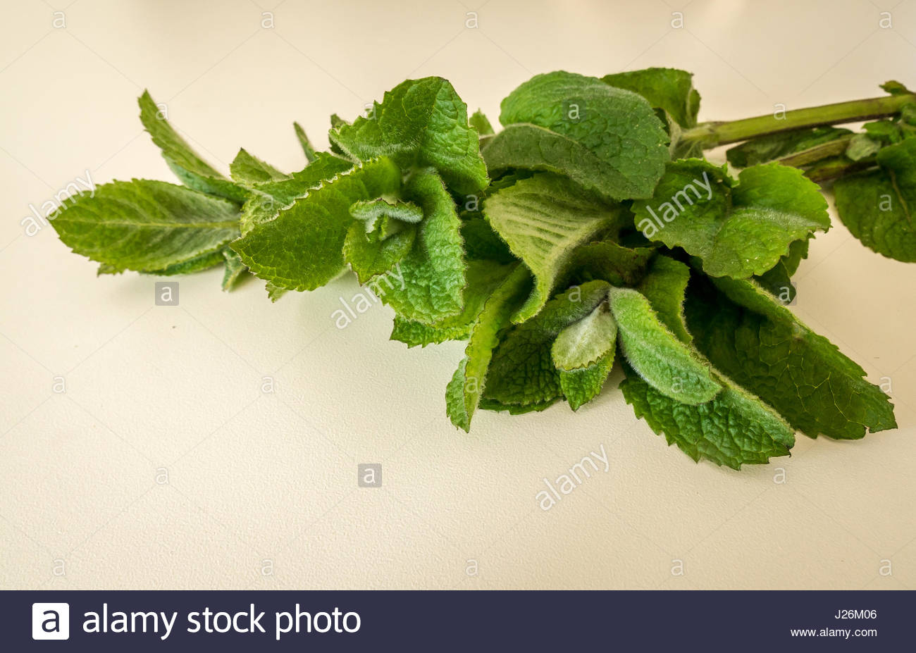 Close up detail of picked apple or woolly mint stalks and leaves on white kitchen counter top background, Scotland, - Stock Image