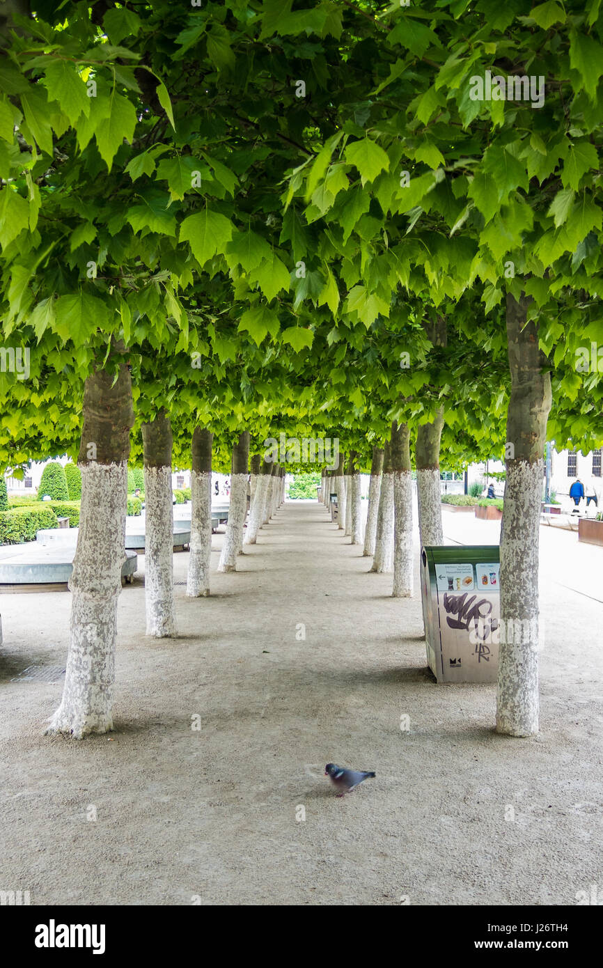 Green-White contrast between leafs and white painted trees - Stock Image
