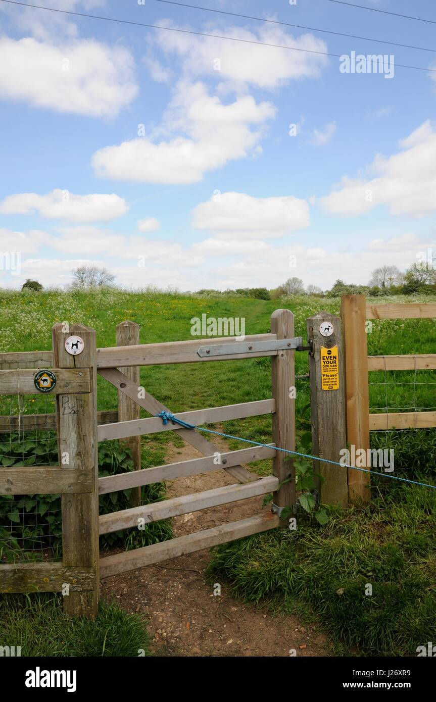 Maulden Church Meadows. Maulden, Bedfordshire, Meadow which is designated a Site of Special Scientific Interest. - Stock Image