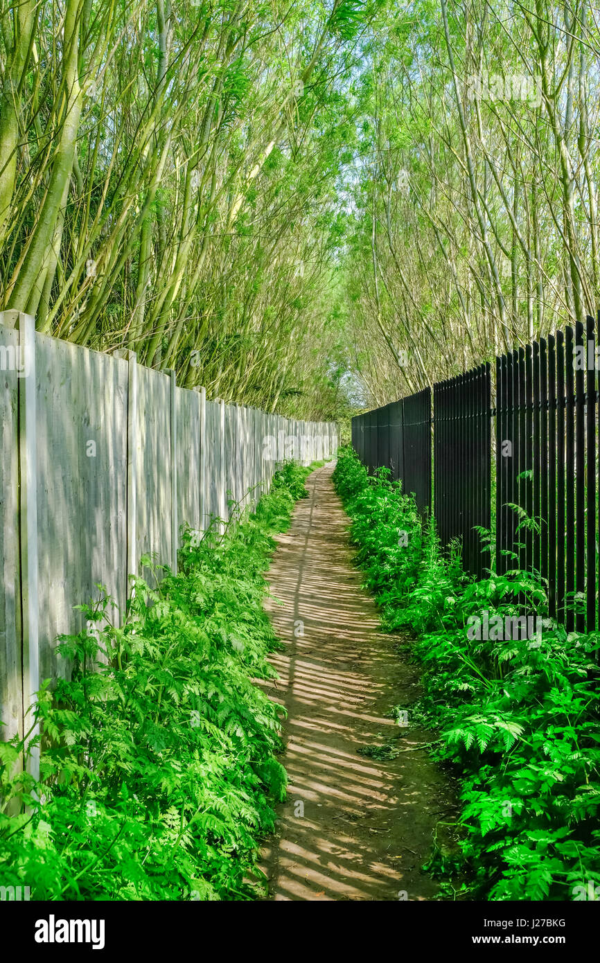 Long narrow passage with fence and railings and tall trees on each side.  A Springtime shot in Abridge, Essex. Stock Photo