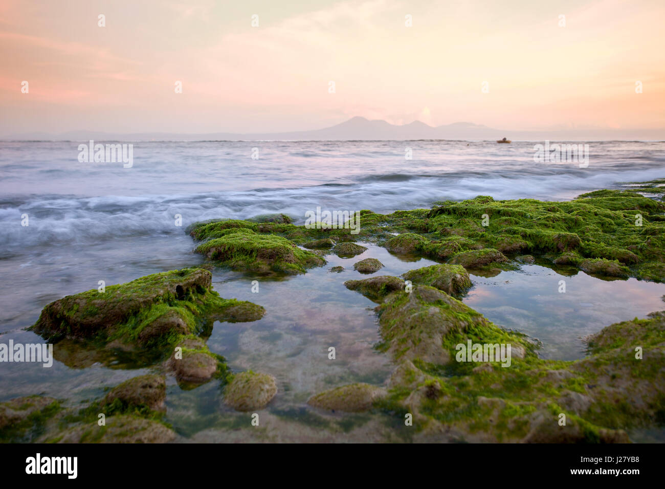Rocky shore covered with green seaweed with the beautiful ocean in the early morning with views of the volcano and - Stock Image