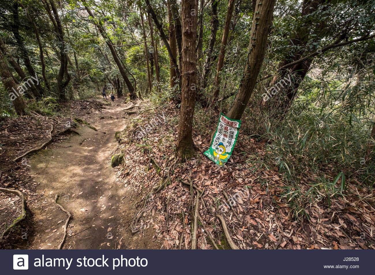 The Daibutsu Hiking Trail, Kamakura, Kanagawa Prefecture, Honshu, Japan - Stock Image