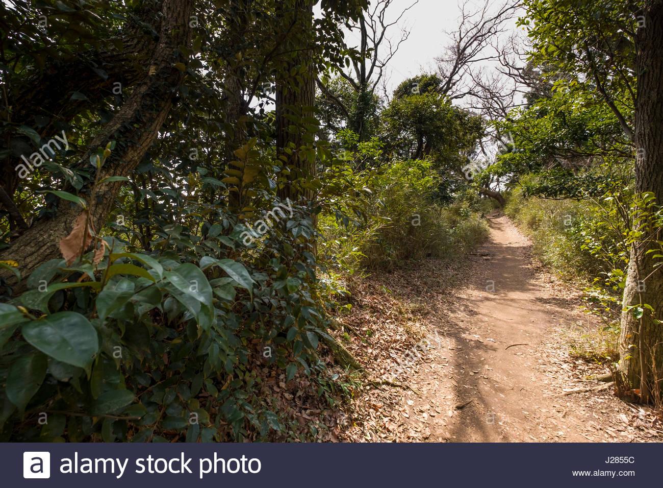 Kuzuharaoka-Daibutsu Hiking Course, Kamakura, Kanagawa Prefecture, Honshu, Japan - Stock Image