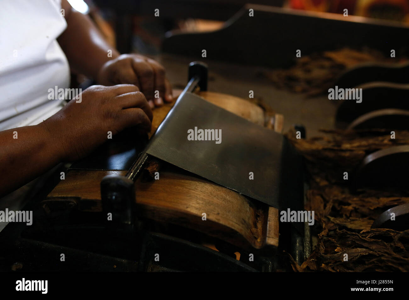 Cropped hands of man making cigar with tobacco leaves in workshop - Stock Image