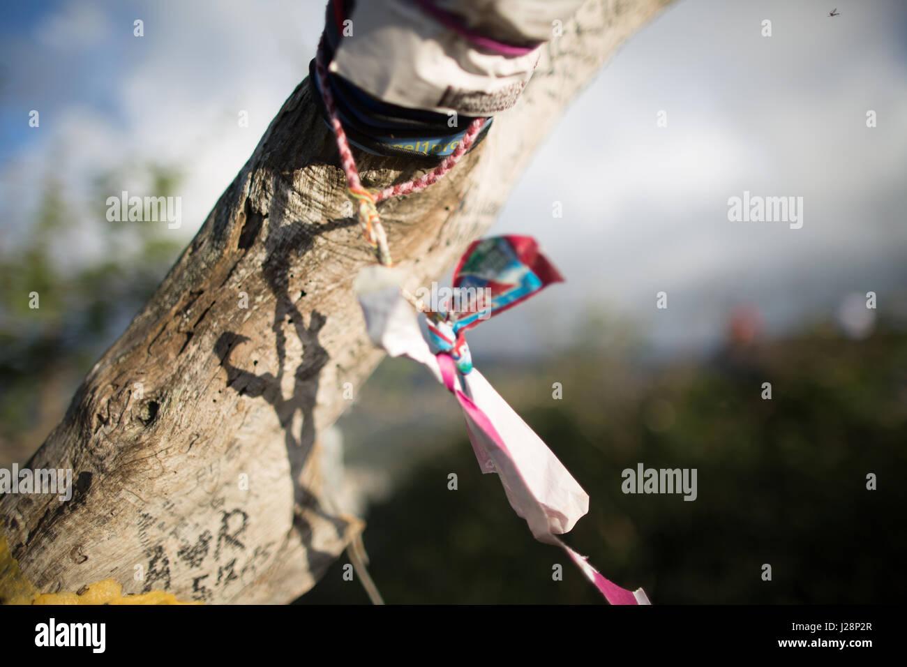 Ribbon on Tree - Stock Image