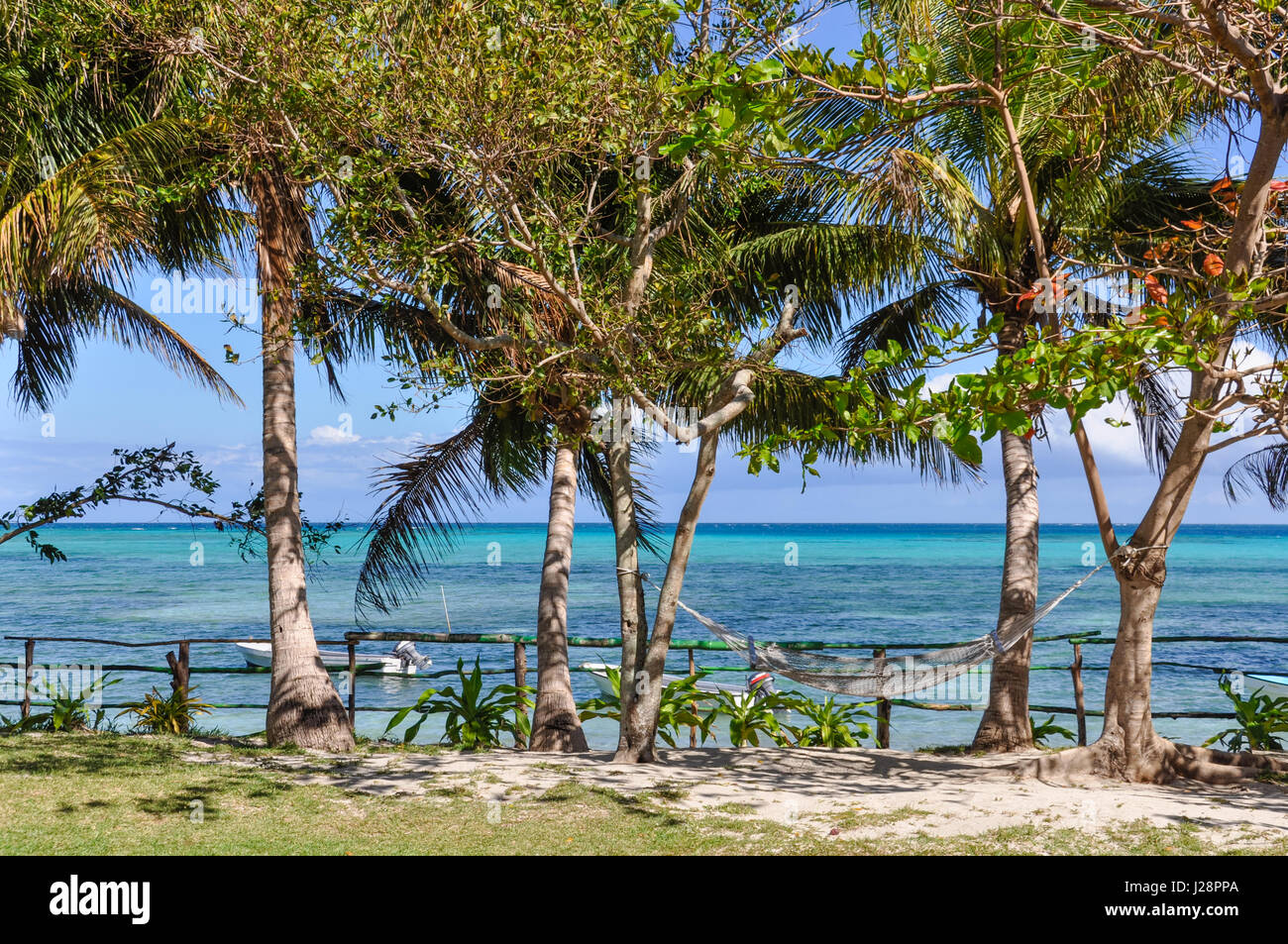 Palm trees and see in Nacula Island, part of the Yasawa Island group in Fiji - Stock Image