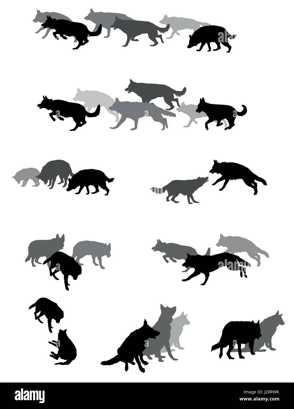 Set Vector Silhouettes Group Of Dogs German Shepherd Dog Black And