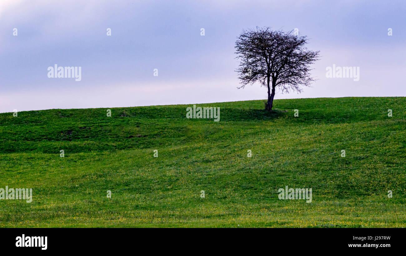 Einsamer Baum - Stock Image
