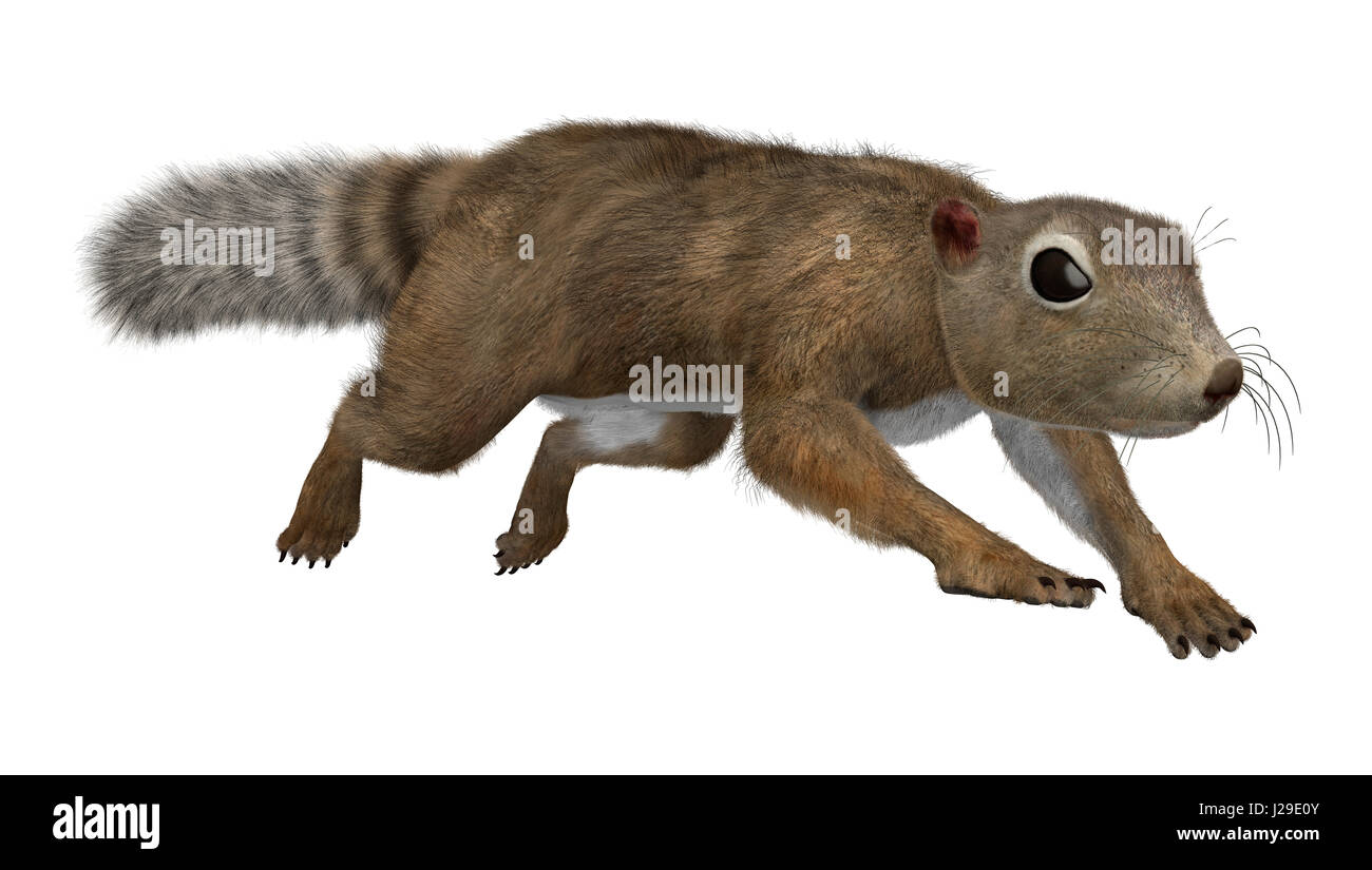 3D rendering of a Gambian sun squirrel isolated on white background Stock Photo
