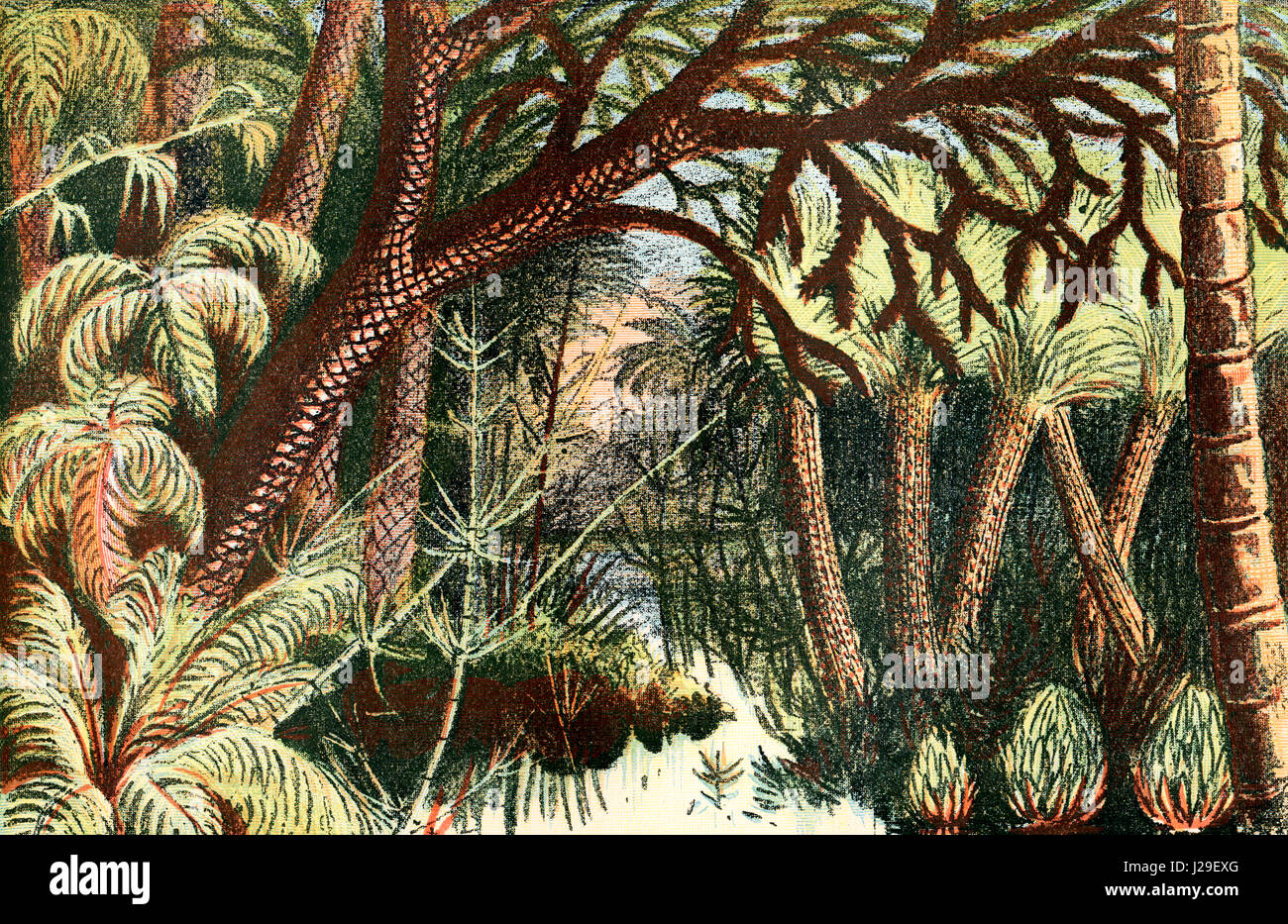 A forest from the Carboniferous era.  From The World's Foundations or Geology for Beginners, published 1883. - Stock Image