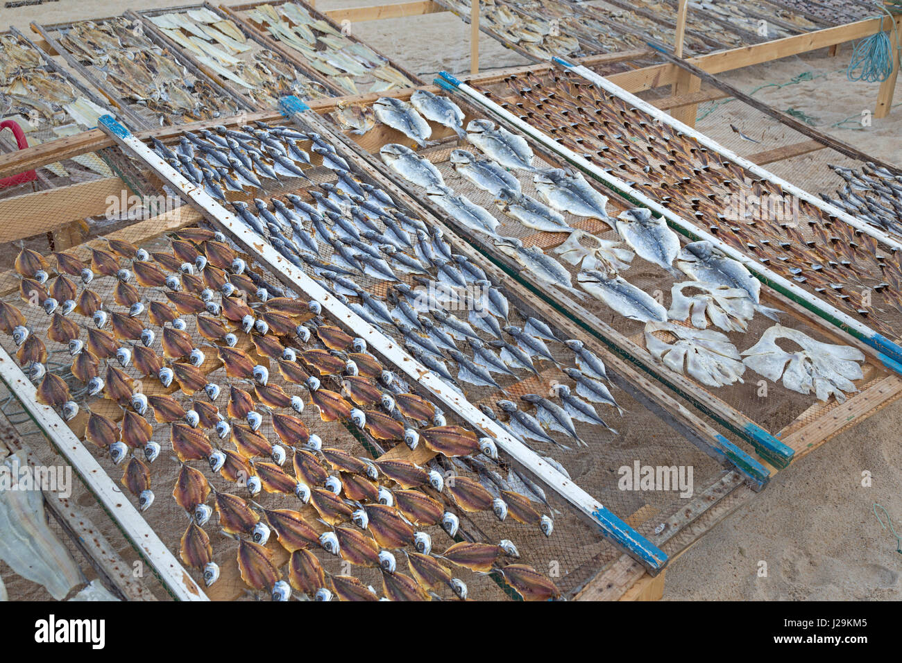 Fish drying in the sun on the beach of Nazare, Oeste, Distrikt Leiria, Portugal, Europe - Stock Image