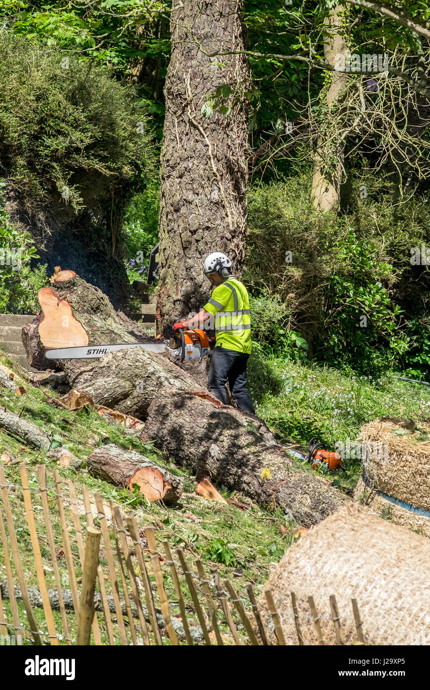 Tree surgeon Arboriculture Chainsaw Cutting Manual worker Protective workwear Equipment Workers Industrial Equipment - Stock Image