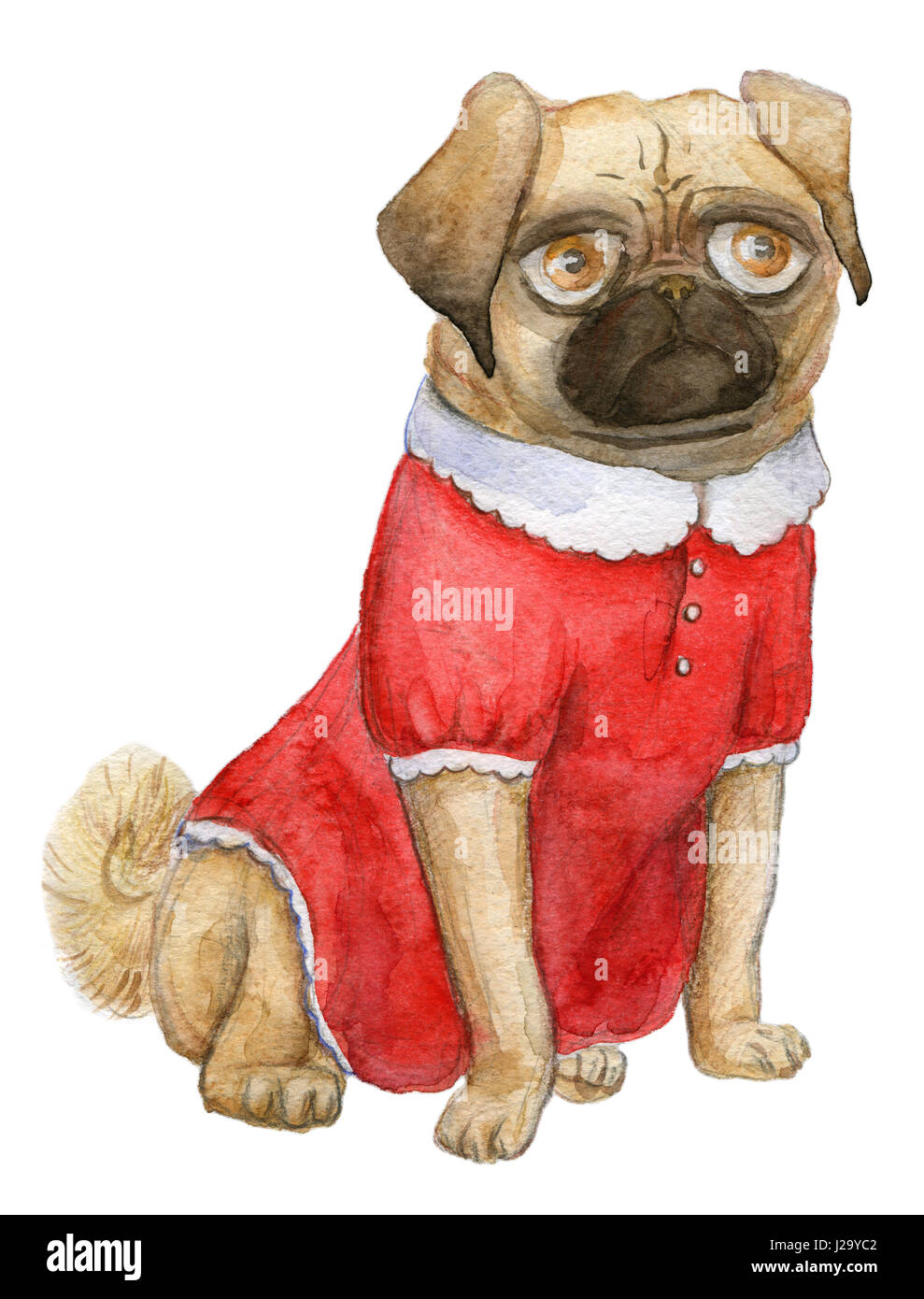 a Pug portrait, mops girl, cutie pug-dog in a cute red dress - Stock Image