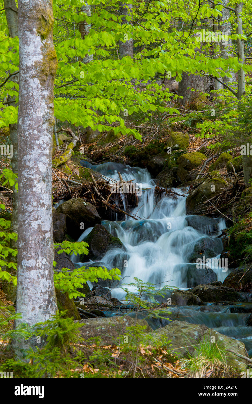 waterfall in a mountain forest in Germany during spring - Stock Image