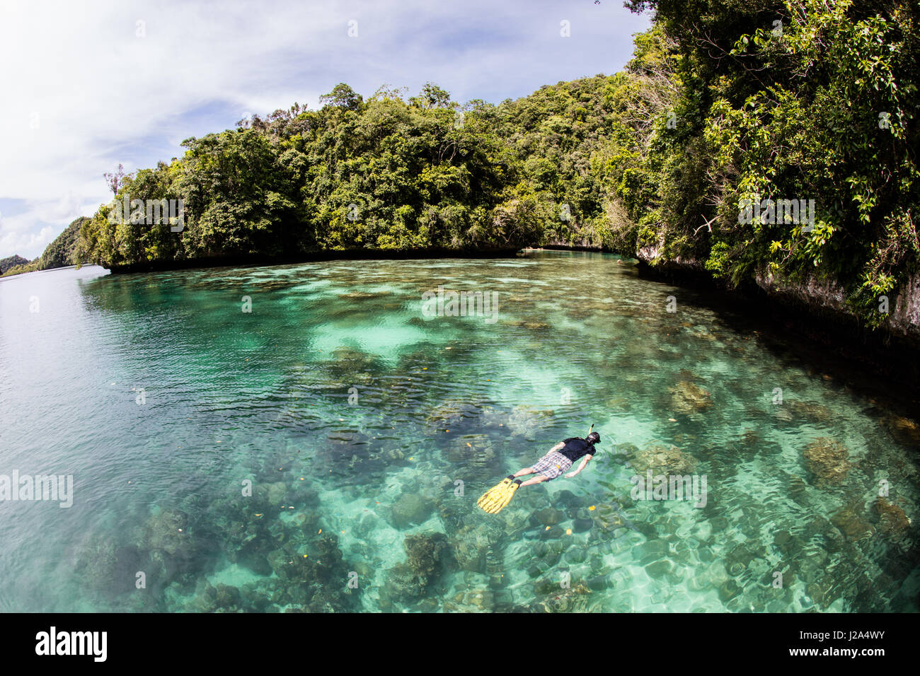 A snorkeler explores a shallow coral reef growing along the edge of a limestone island in the Republic of Palau. - Stock Image