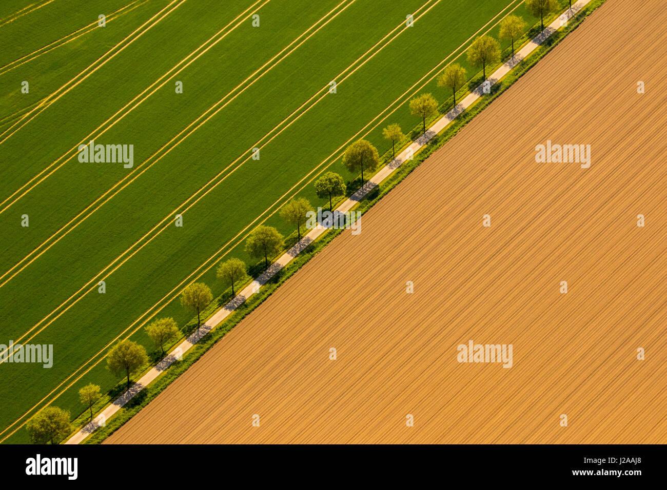 Landstra§e zwischen zwei Feldern - Stock Image