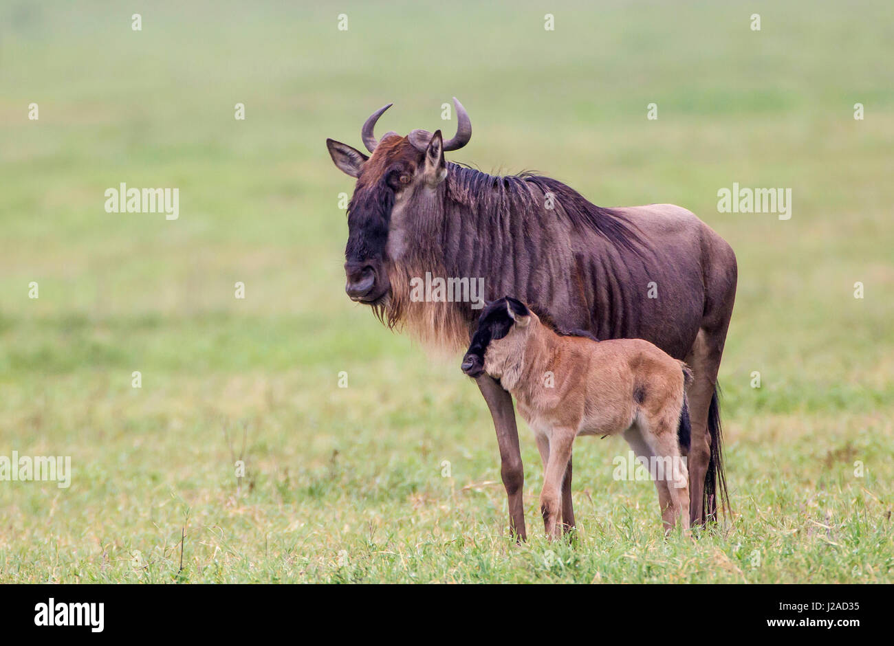 Girls in Ngorongoro